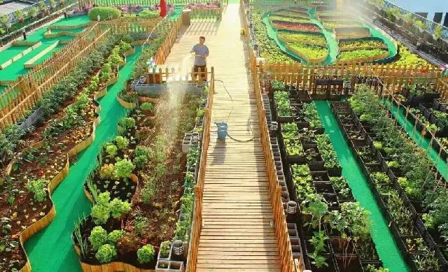 """普陀这个小区有一片现实版""""百草园"""",数十种中草药还能分给居民"""