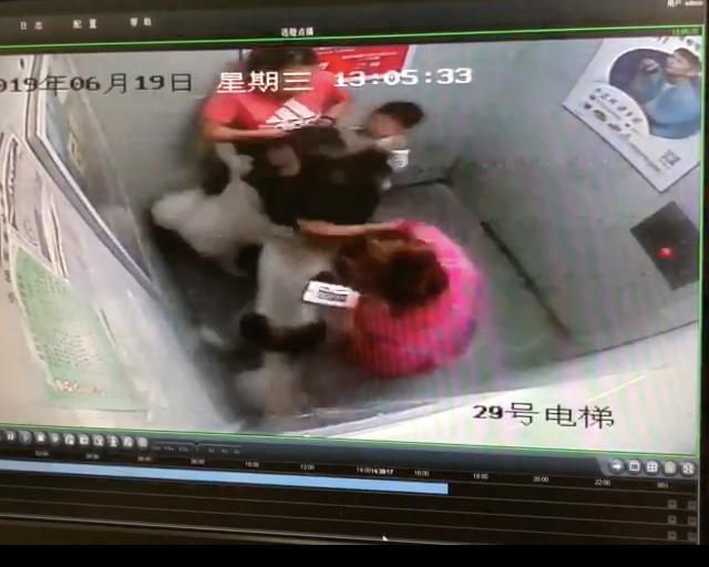 """3岁男孩在电梯被阿拉斯加犬抓出一道10公分伤痕,犬主人辩解""""出电梯才习惯牵绳"""""""
