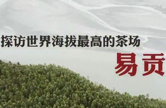 【石榴花开 籽籽同心】探访世界海拔最高的茶厂易贡